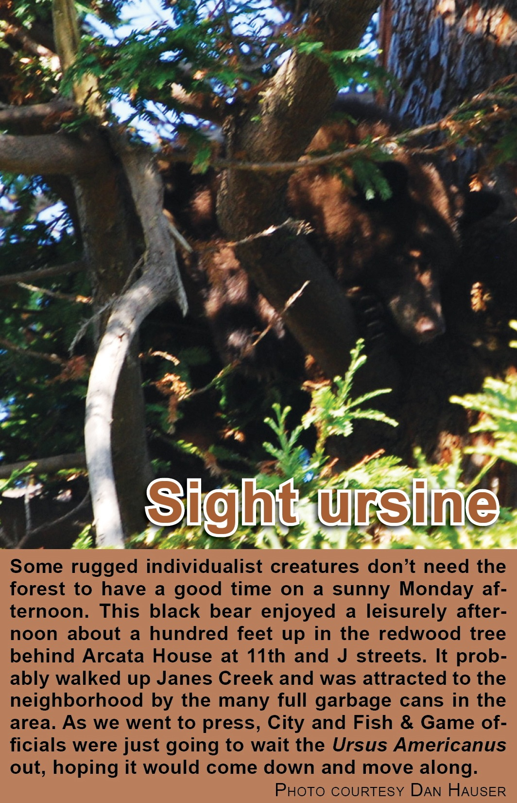 sight-ursine