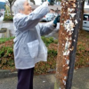 City Cracking Down On Utility Pole Flyers – December 1, 2010