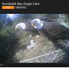 Humboldt Bay Eagle Cam The Feelgood Hit Of Springtime