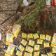 Deputies, Scientists Find Horrific Cannabis Industry Destruction Of Wildlife, Public Lands