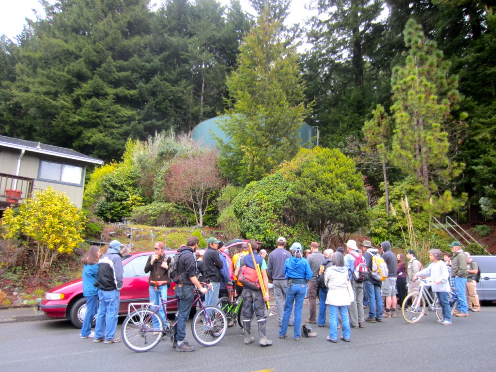 Some 47 volunteers showed up Saturday morning to work on the Arcata Ridge Trail.