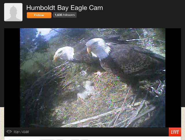 Eagle fam