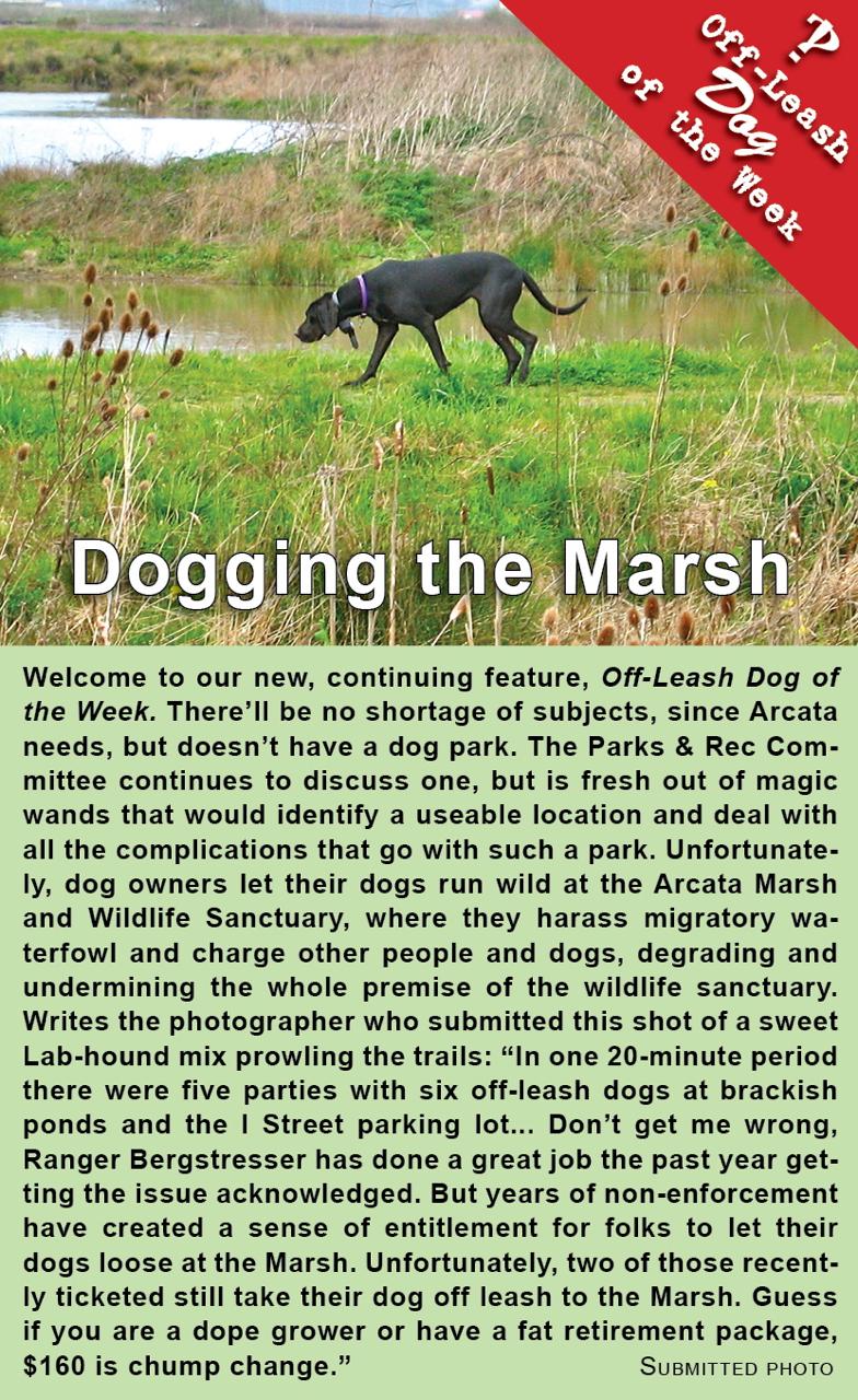 dogging-the-marsh