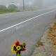 Arcata Mourns Loss Of 'Brilliant' Mother, Scholar, Runner Suzanne Seemann – October 2, 2012