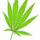Earth Day Forum Probes Marijuana's Environmental Impact